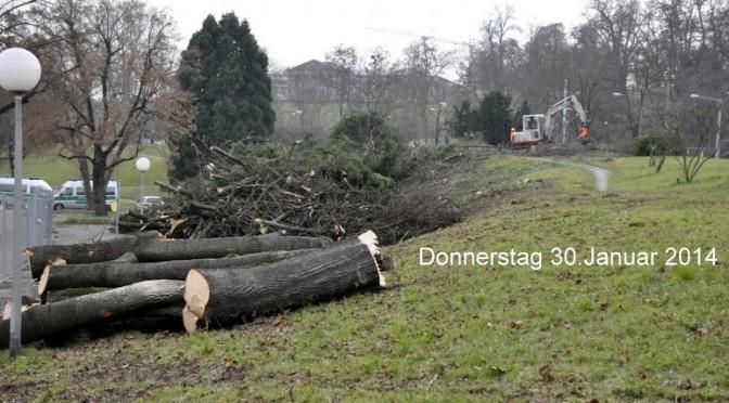 Bäume fallen für Baulogistikfläche