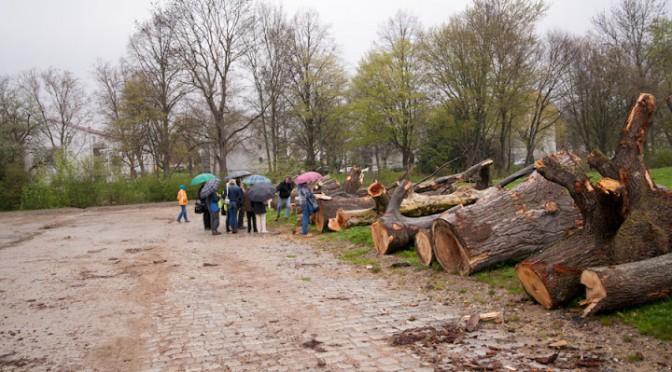 greenwashing der Schlossgartenbäume