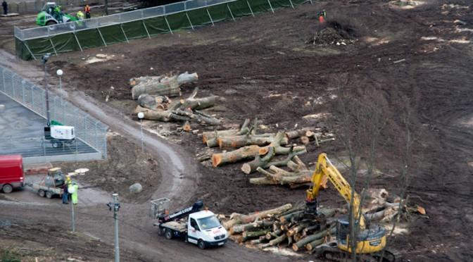 Gerodet, verrottet und nun öffentlich ausgestellt – Bäume in Stuttgart