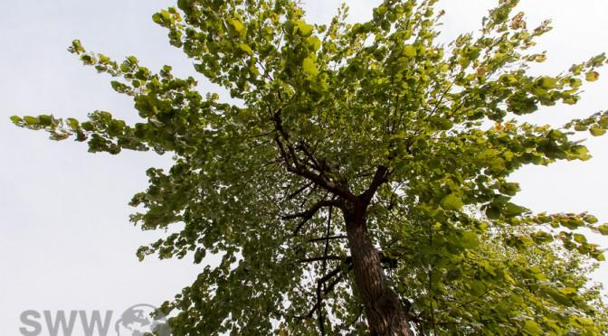 Besuch bei den Bäumen Sommer 2015