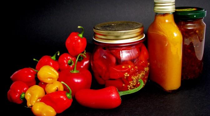 Chilipflanzen und Ernte