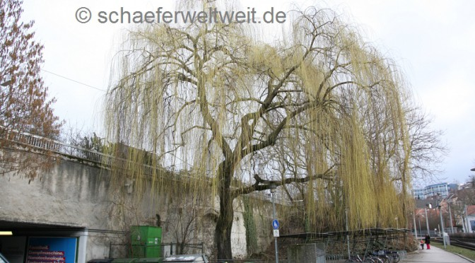 Yoko Ono please help us – A Wish Tree for Feuerbach